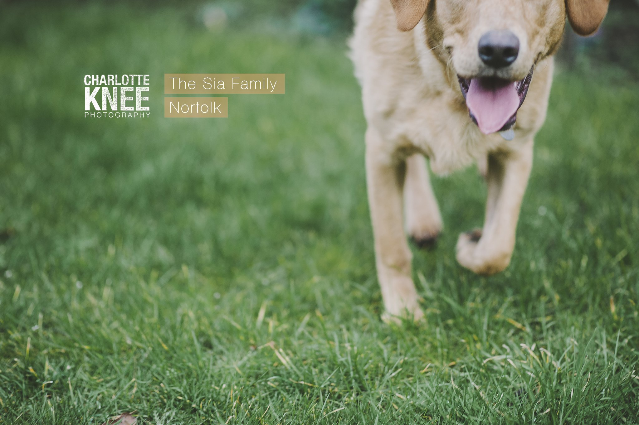 Family-Pet-Dog-Portrait-Photography-Charlotte-Knee-Photography